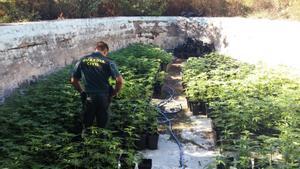 Plantación de marihuana intervenida por la Guardia Civil en La Jonquera (Alt Empordà).