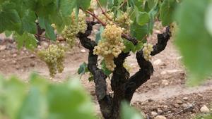 Brussel·les preveu aprovar ajuts al vi aquesta setmana