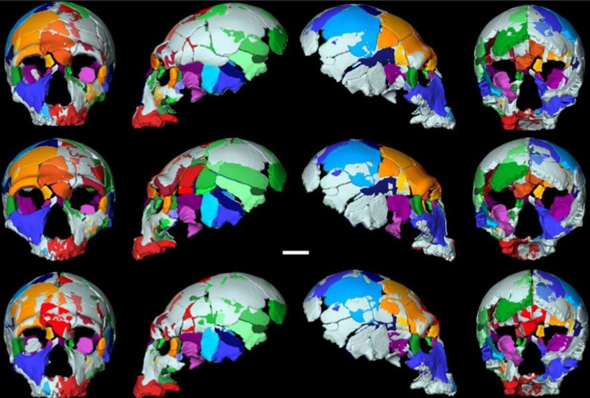 Reconstrucciones de uno de los cráneos hallados en Apidima