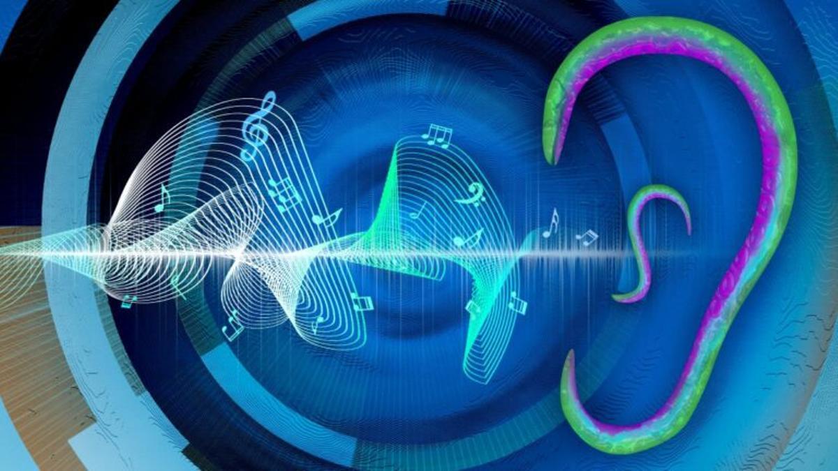 Los sonidos se pueden escuchar a través de la piel, sin necesidad de oídos