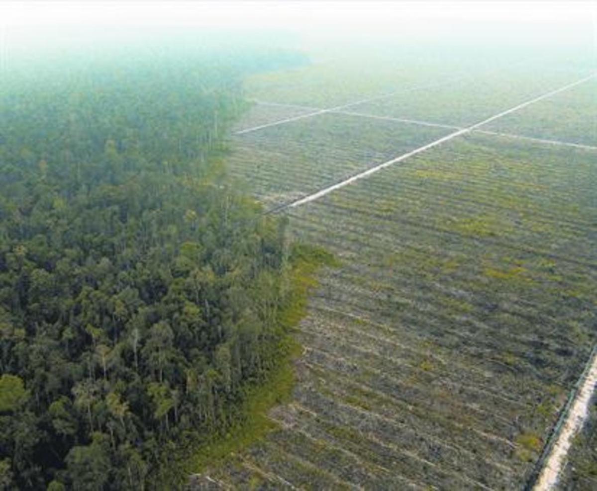 Deforestación en Sumatrapara una plantación de aceite de palma.