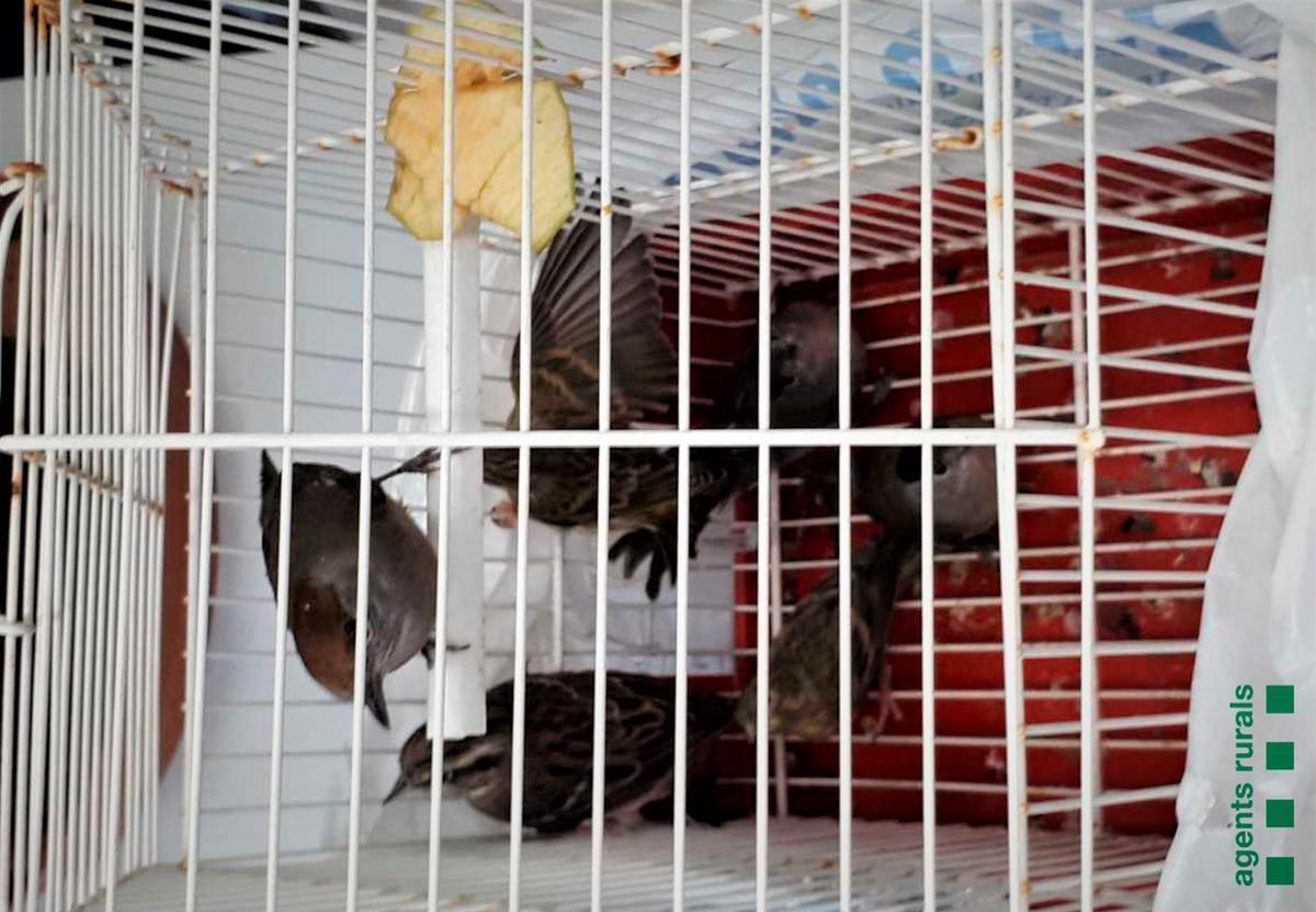 Pájaros recuperados por Agents Rurals en Mataró.
