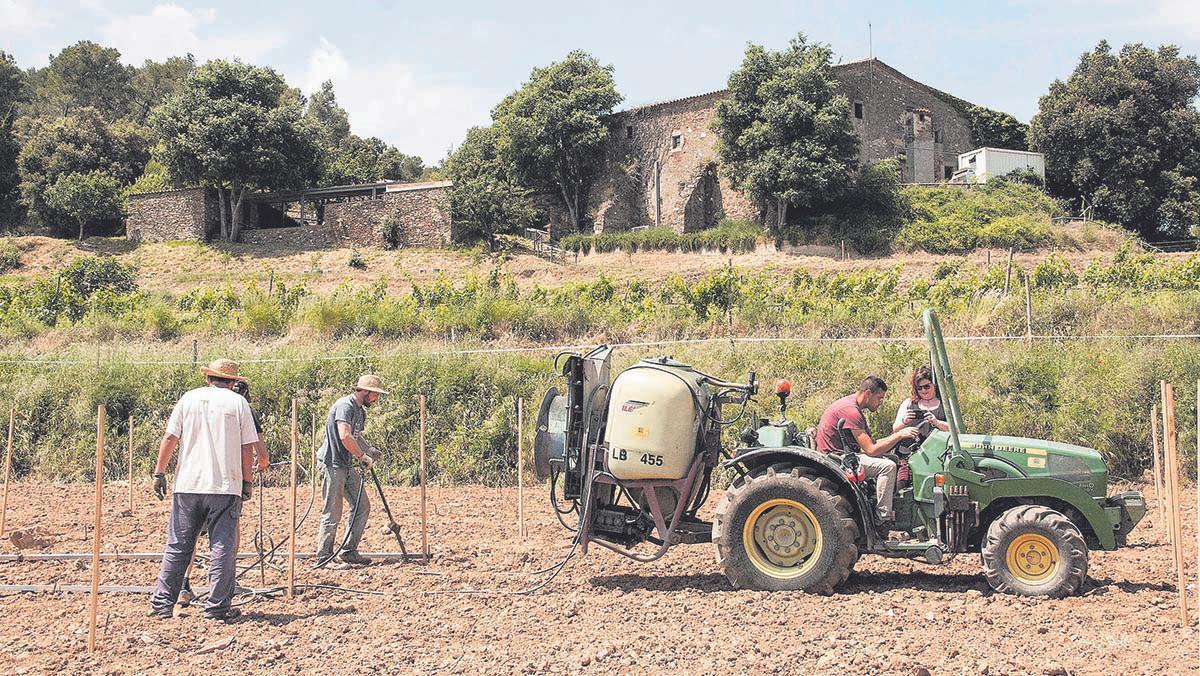 En la masía de Can Calopa de Dalt, gestionada por la cooperativa L'Olivera, cultivan de forma sostenible 2,5 hectáreas de viñas