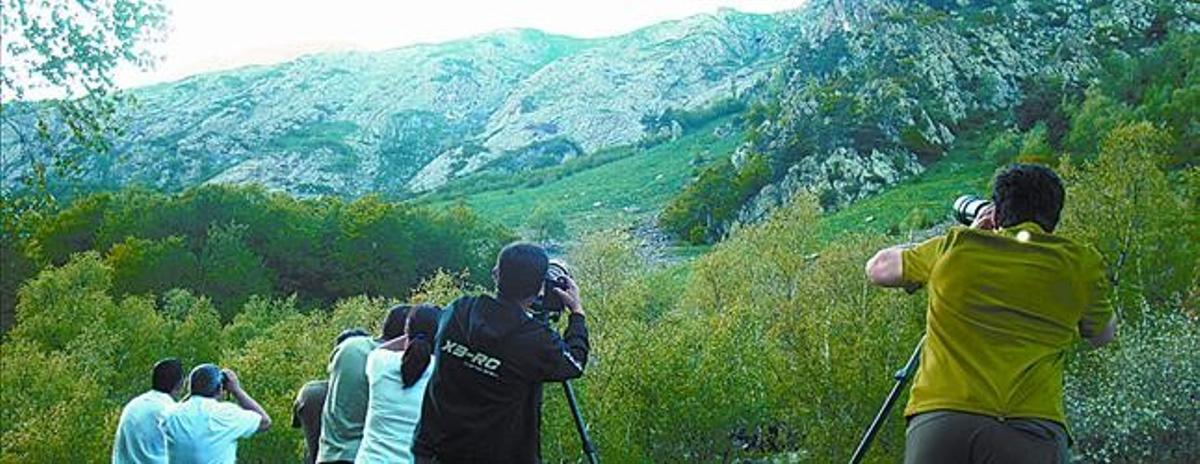 ESPECTÁCULO DE LA NATURALEZA 3Arriba, uno de los osos avistados recientemente en el valle de Aran. Sobre estas líneas, un grupo de observadores tratando de captar imágenes de estos animales.