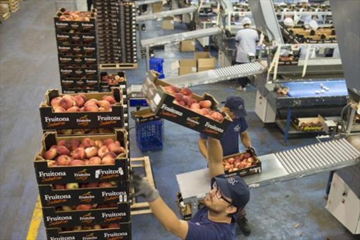 Trabajadores del sector agrícola, el que concentra más temporalidad en Catalunya.