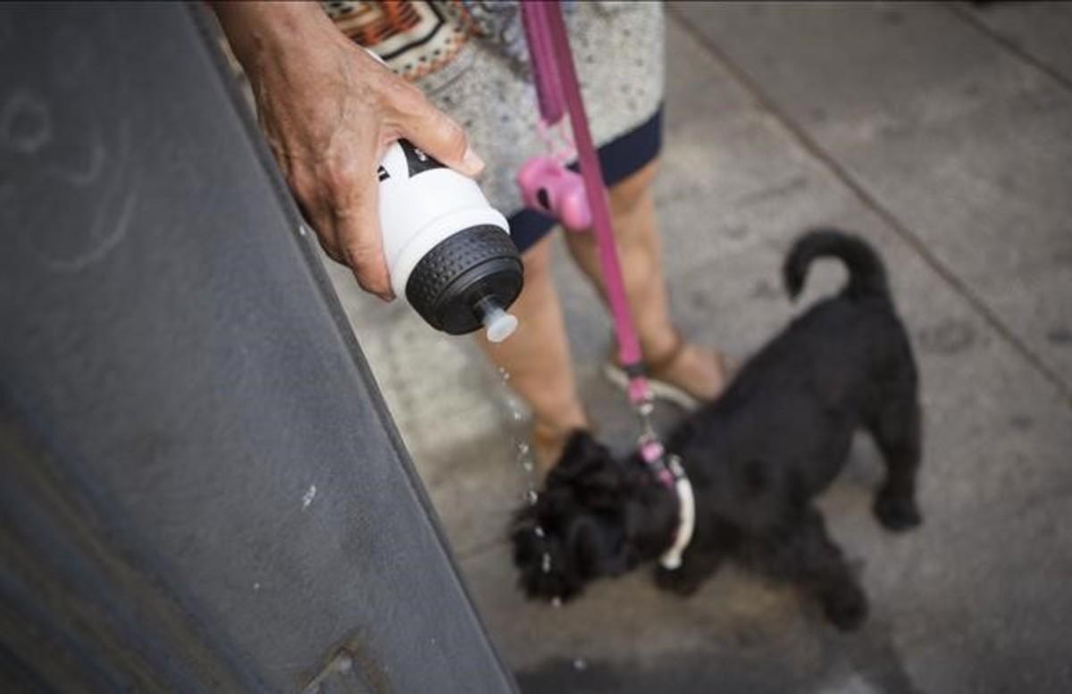 Una mujer rociando con agua el orín de su perro