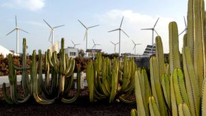 Foto de un parque eólico en Canarias.