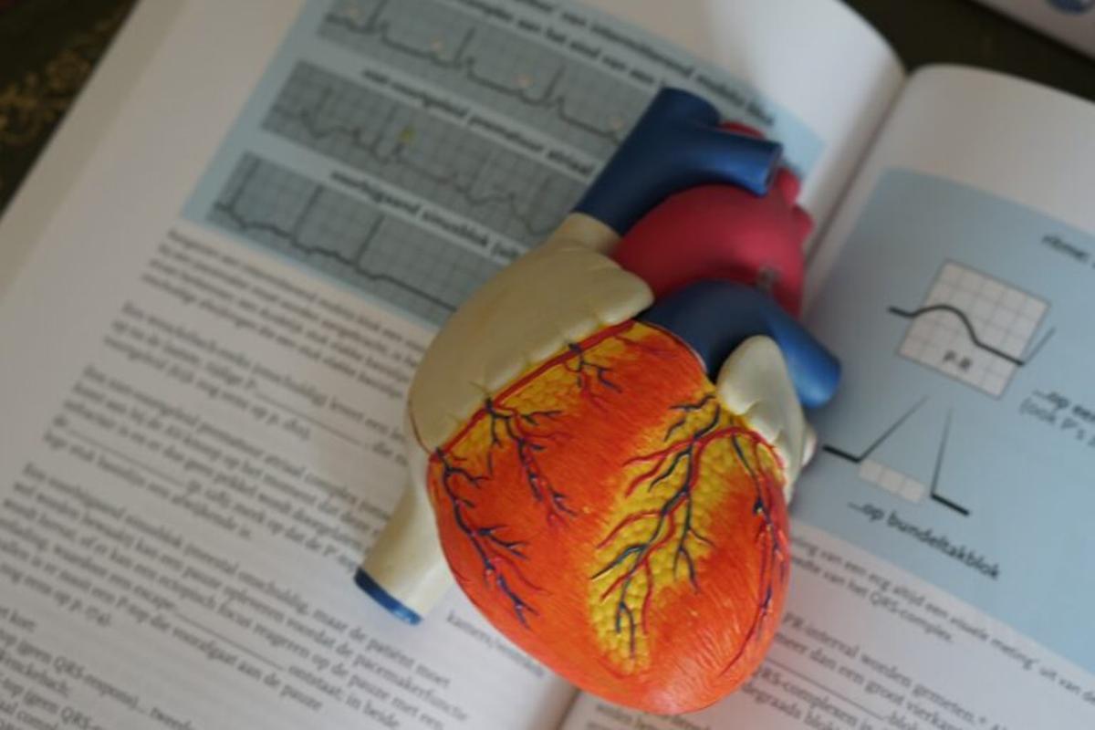 Logran reducir la presión arterial en pacientes con hipertensión a través de ultrasonidos