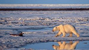 El Ártico desde Alaska.