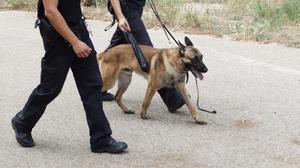 Una unidad canina de la Policía Nacional