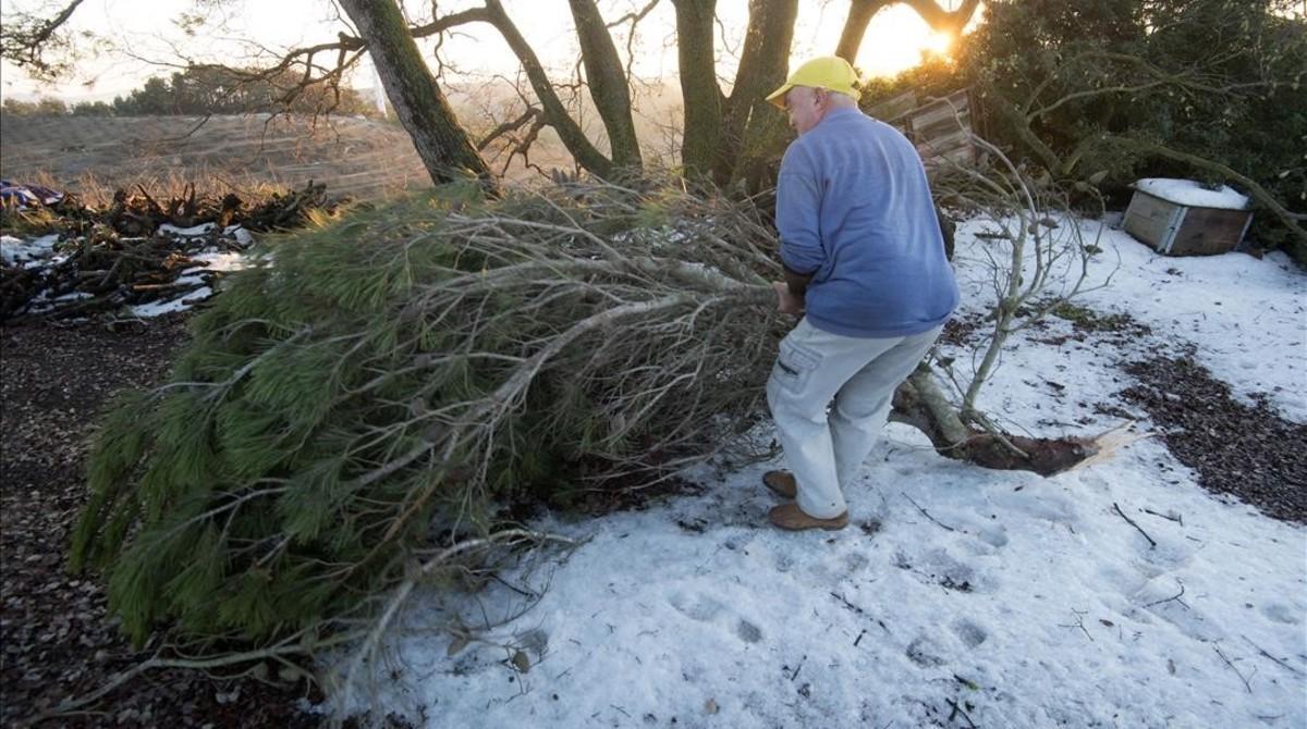 Un payés retira ramas caídas por el peso de la escarcha en su finca de La Fatarella, esta semana.