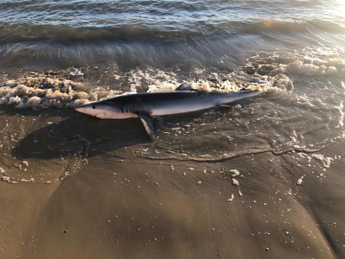 Las olas impedían al animal volver al mar