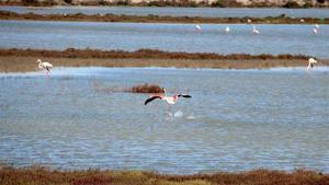 El delta de l'Ebre recupera dues llacunes de gran valor ecològic