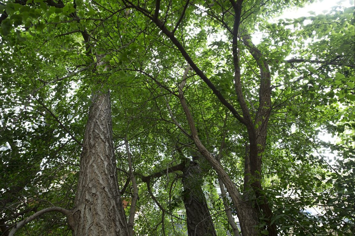Honduras continuará solicitando apoyo para que pueda acceder a recursos del Fondo Verde del Clima para mitigar los efectos el cambio climático.