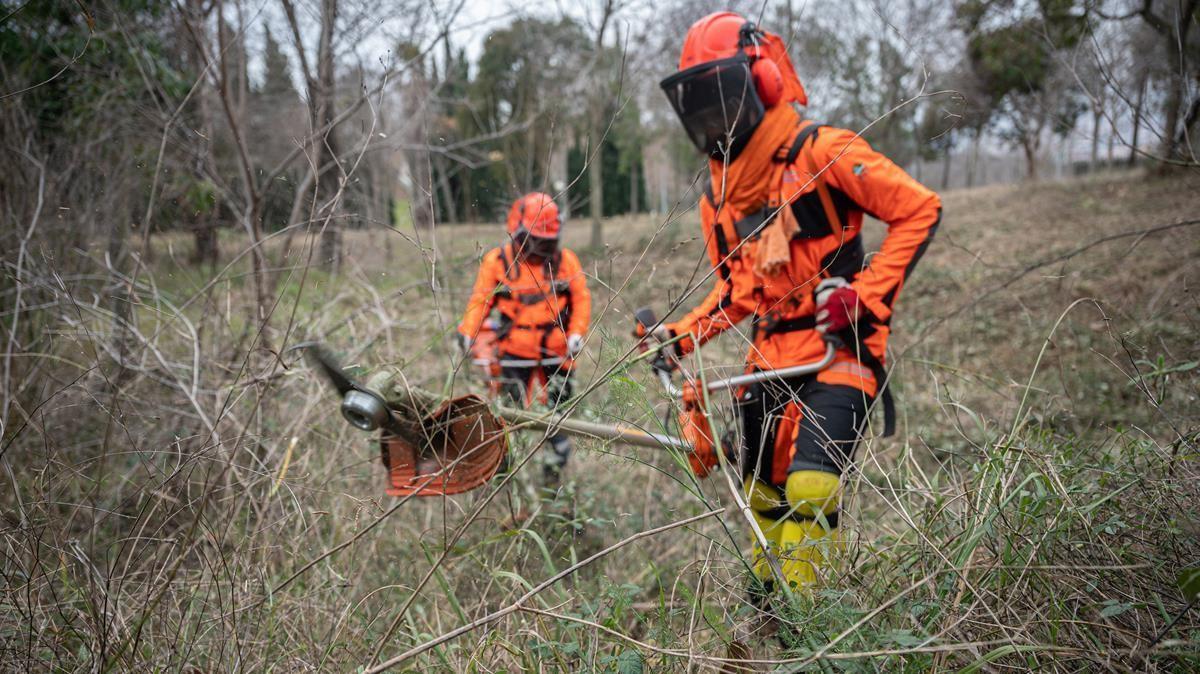 Participantes en el equipo forestal del Programa Arrela't, de la Fundació Formació i Treball, trabajan en el bosque de Montjuïc.