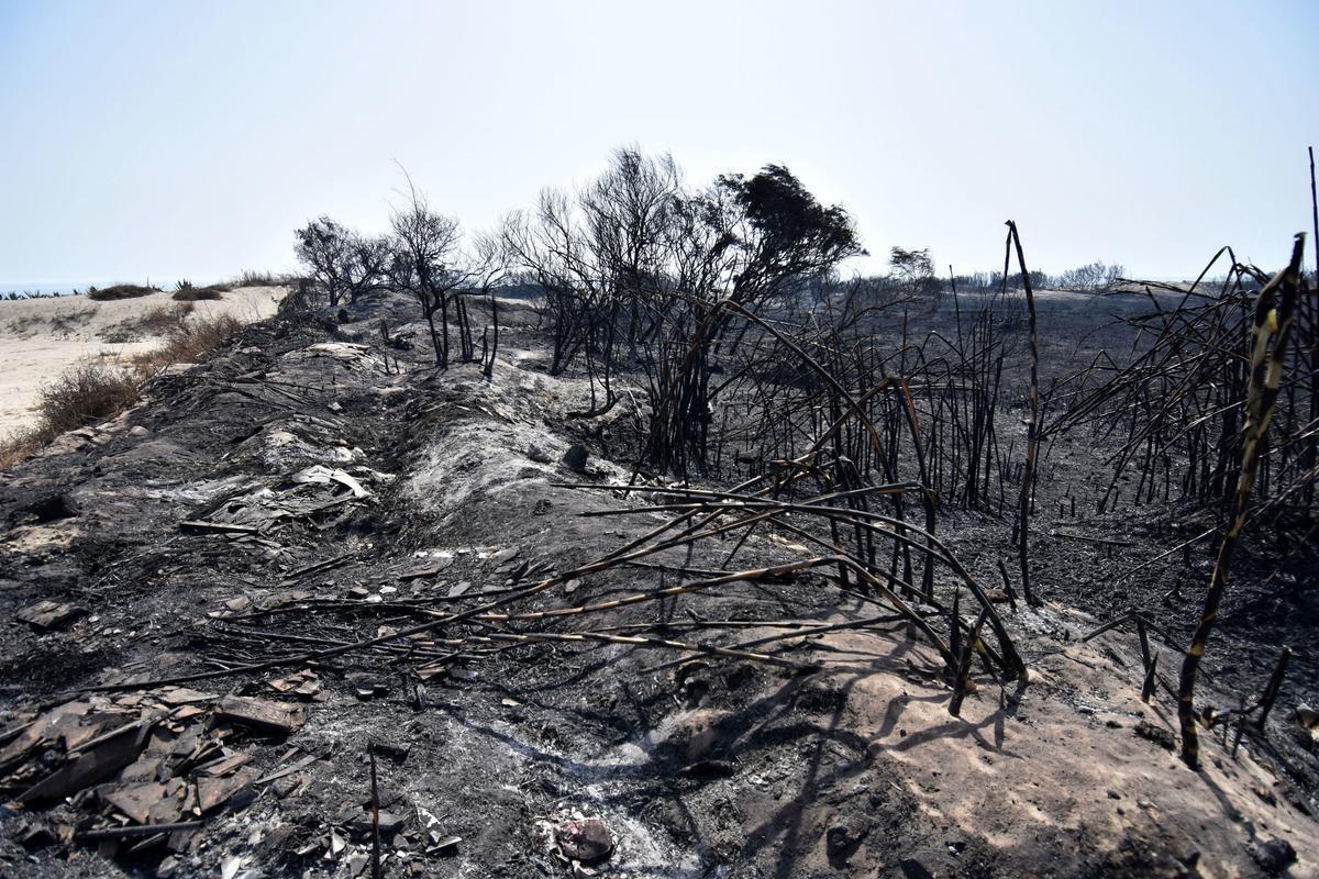 Italia envía refuerzos a Sicilia, que sufre más 160 incendios en 48 horas