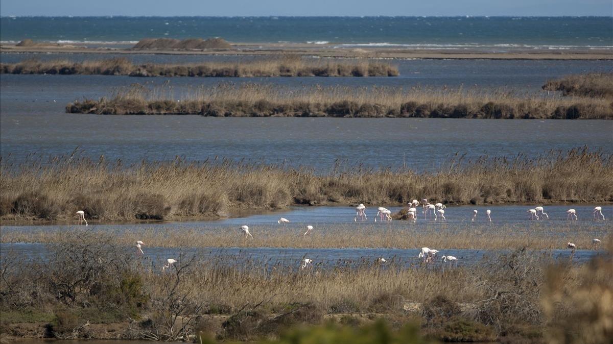 Este tipo de fenómenos meteorológicos extremos ponen en riesgo ecosistemas como las lagunas, hábitat de una gran cantidad de especies de ave
