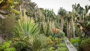 Jardín de plantas suculentas.