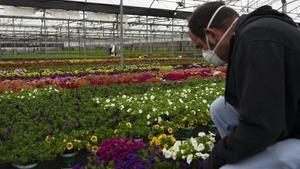 Un jardinero arregla las flores y plantas que no va a poder vender esta primavera.