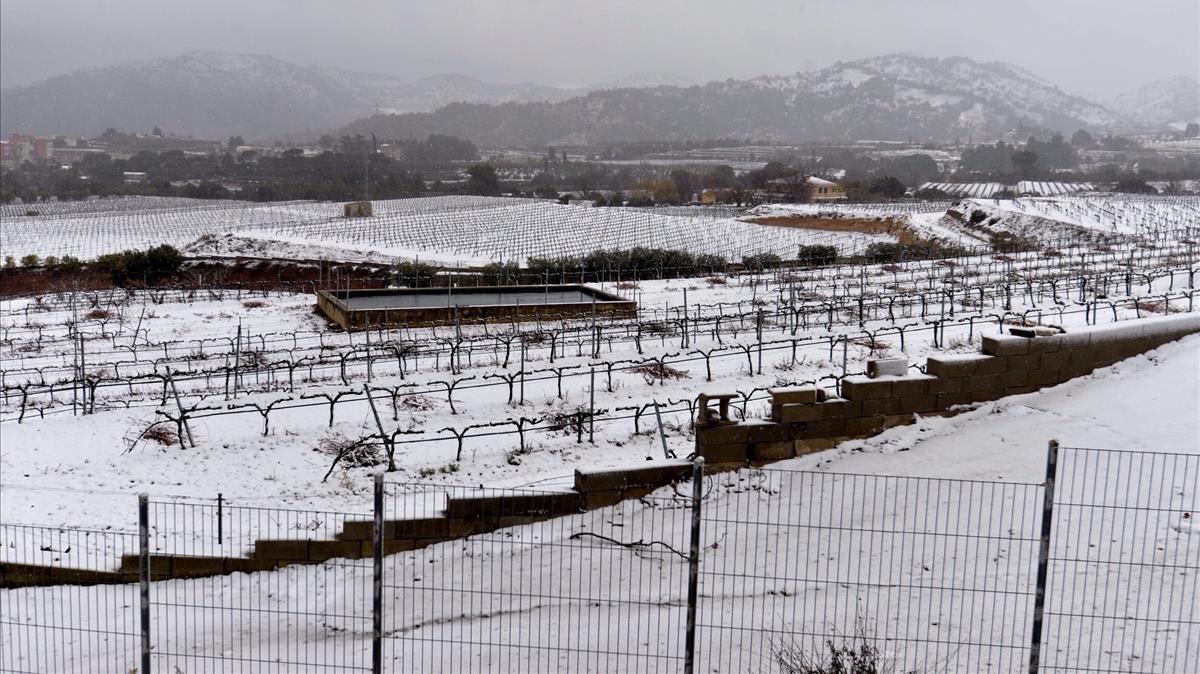 La nieve cubre los campos de Falset, en el Priorat.