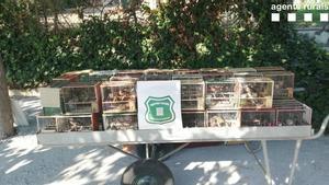 Incautados pájaros de especies protegidas en Sabadell.