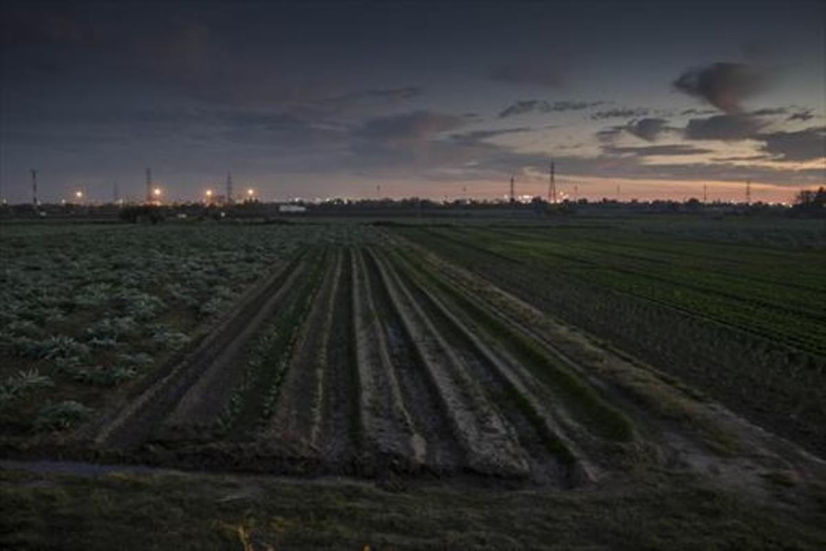 Agricultura localCampos de cultivos en el Parc Agrari del Baix Llobregat.