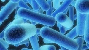 La bacteria de la legionelosis
