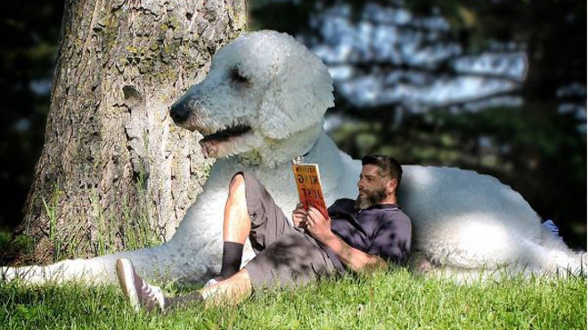 Juji, el perro gigante, y Chris Cline, su dueño, en un día en el campo.