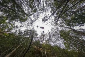 Rescatats del foc 200 arbres prehistòrics a Austràlia