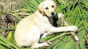 ambi, el perro que mataron a golpes, solo tenía un año de vida.