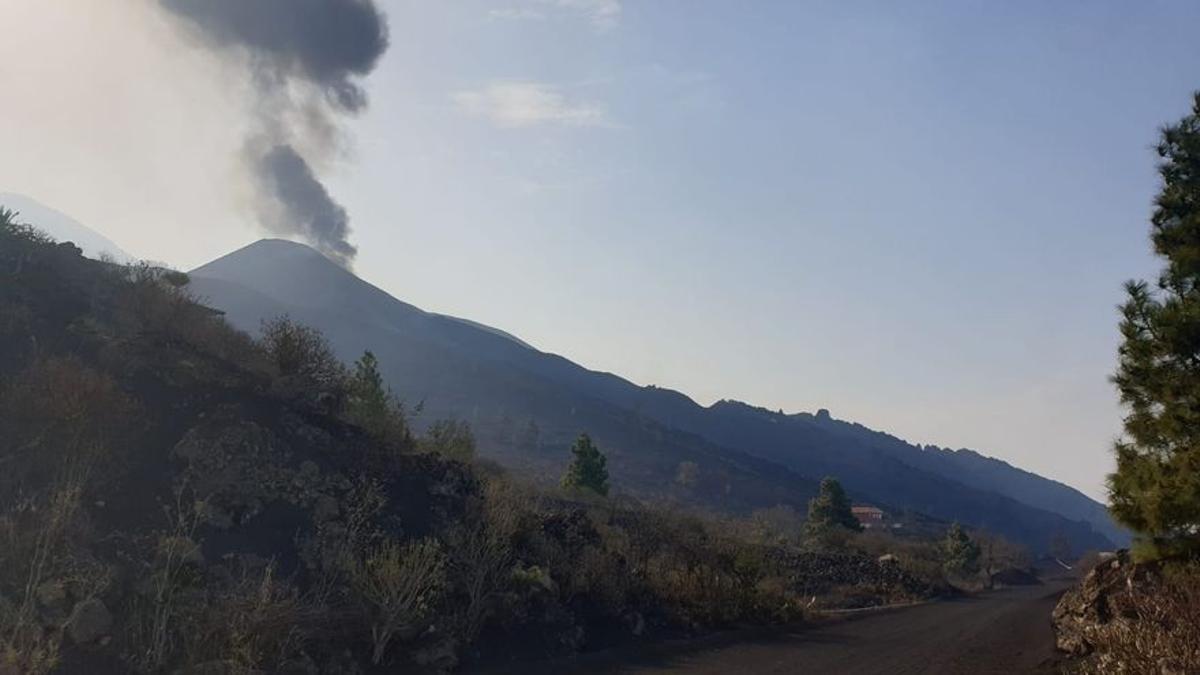 Los peces huyen de la zona donde la colada de lava del volcán de La Palma alcanzará el mar