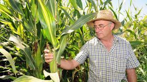 El agricultor Josep Pàmies, en una foto de archivo.