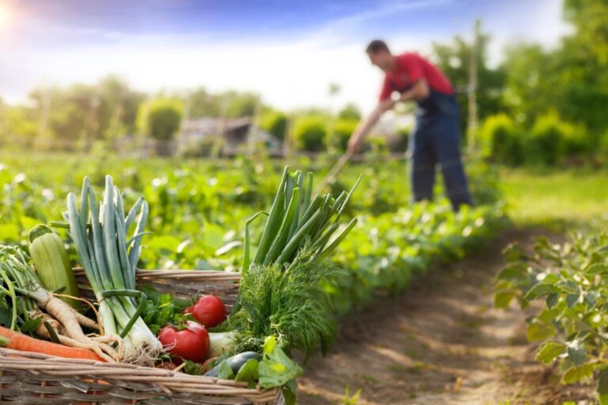 La prórroga de la política agraria común, a debate