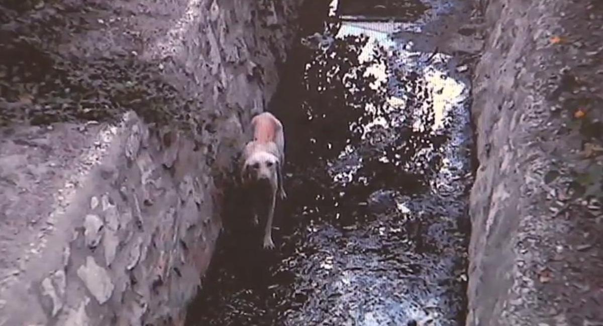 Vídeo con imágenes del animal, antes y después del rescate.