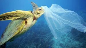 Les tortugues marines confonen l'olor del plàstic amb l'aliment