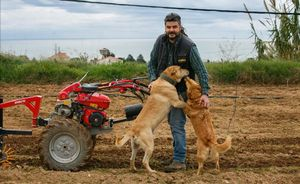 5 12 2020 - Mataro - Elm Pou trabajando en la finca en el cami de la Senia en Mataro - Hacen una camapana de micomezenazgo en goteo para comprar un pequeno tractor - Foto Anna Mas