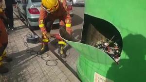 Rescatan tres gatos de un contenedor de vidrio en Picassent (Valencia).