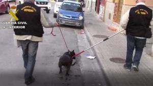 Detenidos 22 ladrones de perros de caza