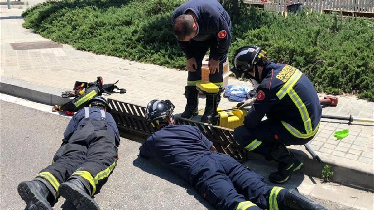Los bomberos intentan llegar hasta los patitos a través del imbornal, en la calle de Pujalt.
