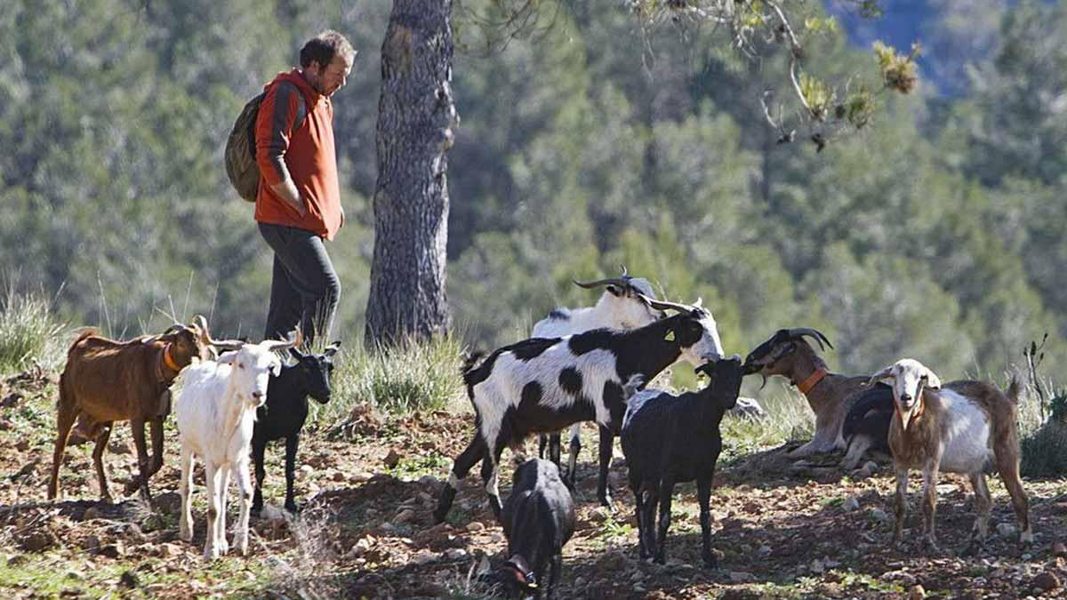 «Desi», uno de los pastores del proyecto, durante uno de los paseos.