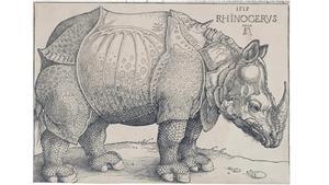 'Rinoceronte', el famoso grabado de Durero.