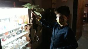 Un niño sostiene una mandrágora que ha encontrado en la sala de pociones.