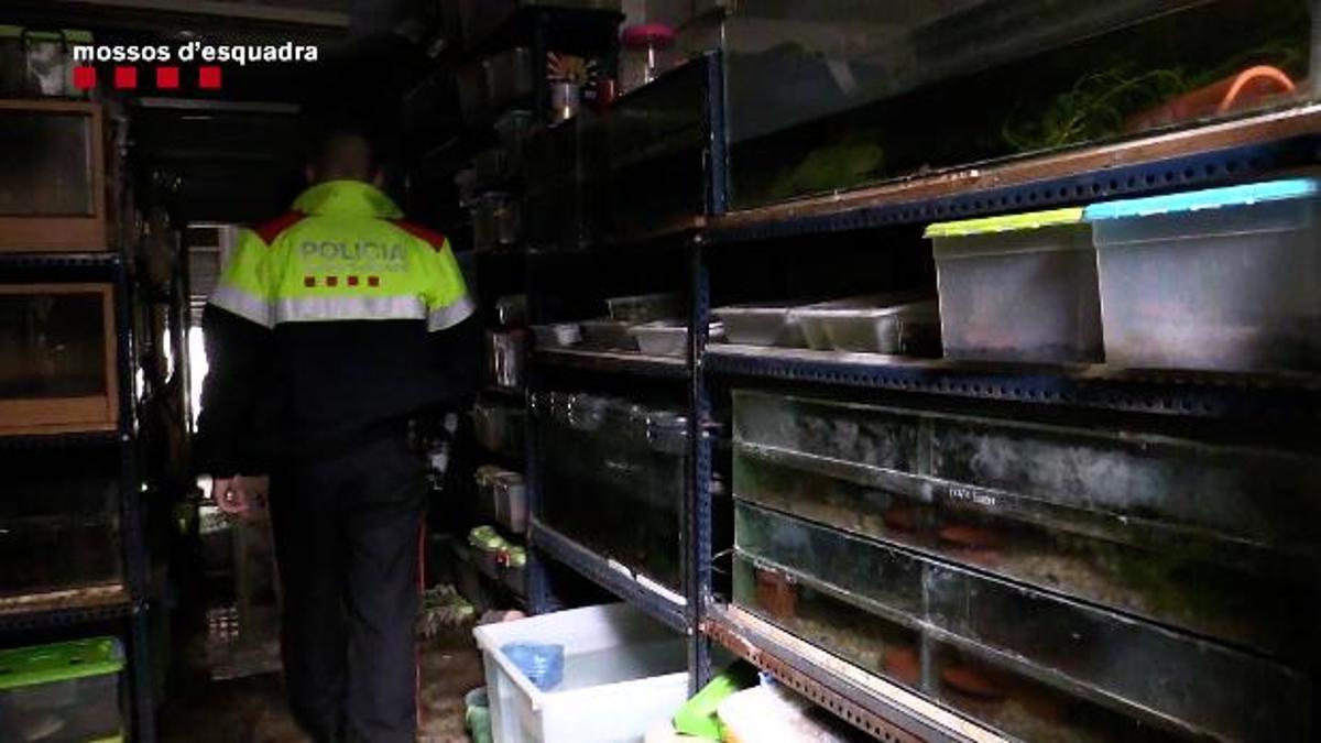 El almacén ilegal de especies protegidas de anfibios descubierto a raíz del incendio en un edificio de Gràcia.