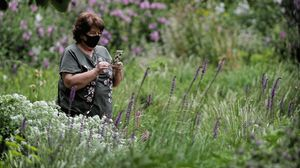 Una mujer protegida con mascarilla mira suteléfono móvil el segundo día de la reapertura del Real Jardín Botánico de Madrid, el 26 de mayo.