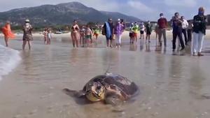 La tortuga boba Sparrowsalió de Cádiz y ha cruzado el Mediterráneo hasta Cerdeña.