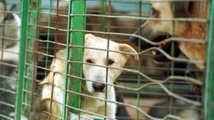 Més de 138.000 gossos i gats van ser abandonats a Espanya el 2018