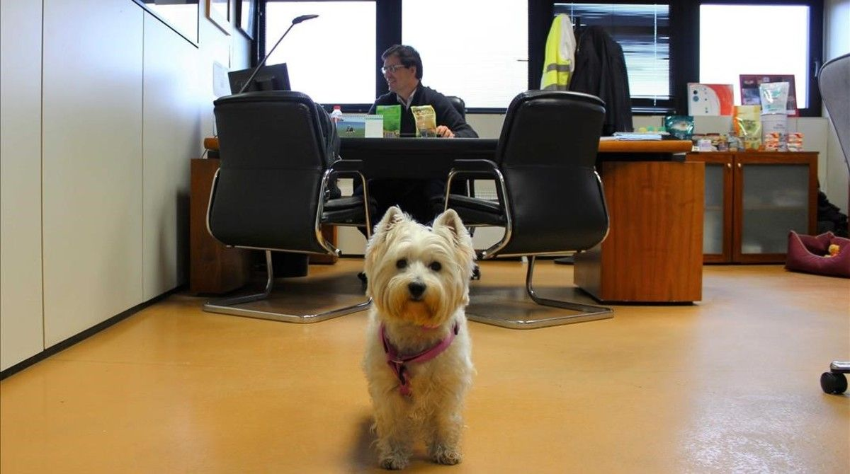 Un despacho de la compañía Purina. En abril presentó el programa Pets@Work.