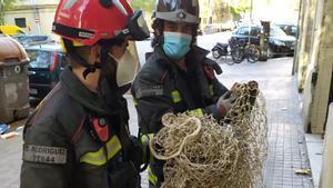 Los bomberos rescatan a una gallina de un andamio de Barcelona