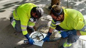 Dos operarios realizando tareas de control de plagas en L'Hospitalet de Llobregat.