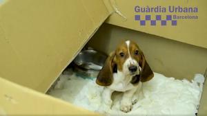 La Guardia Urbana clausura una tienda de animales en Barcelona.